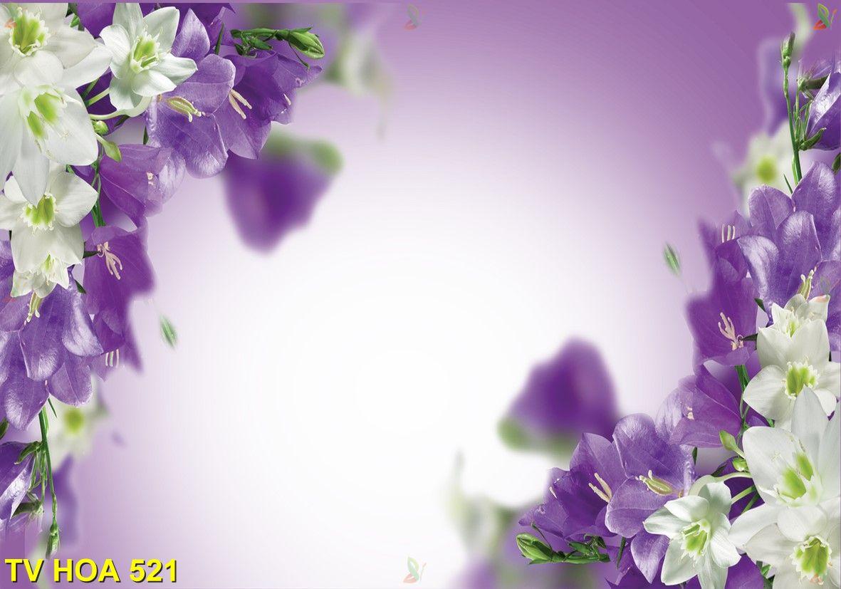Tranh về hoa TV Hoa 521