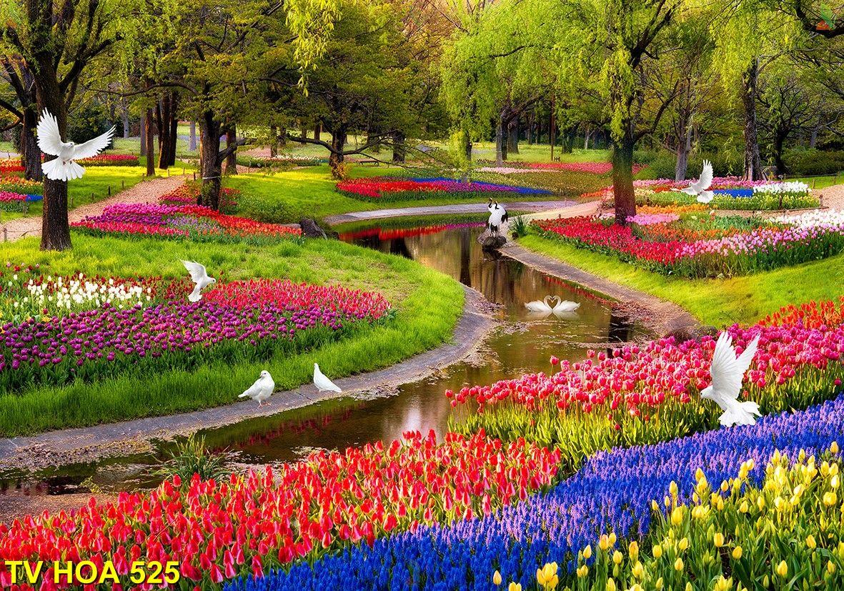 Tranh về hoa TV Hoa 525