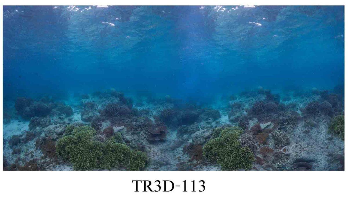 113 1200x720 - Tranh hồ cá 113