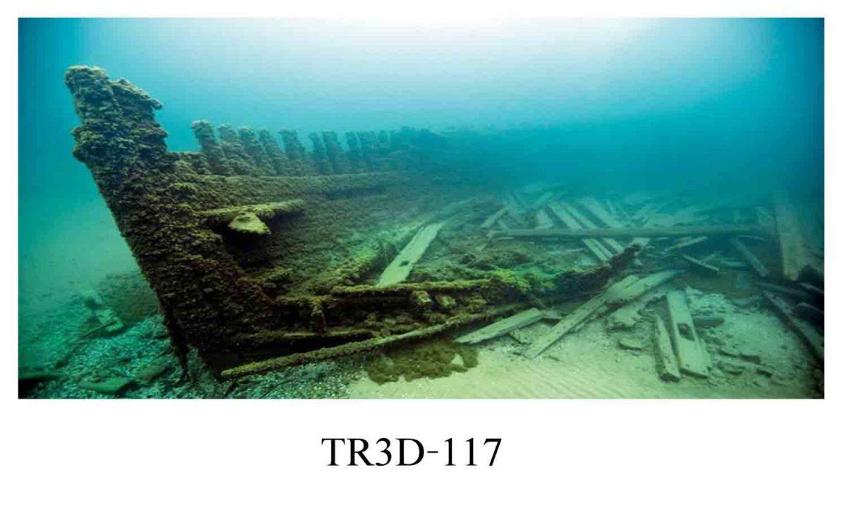 117 1200x720 - Tranh hồ cá 117