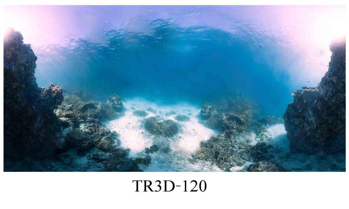 120 1200x720 - Tranh hồ cá 120