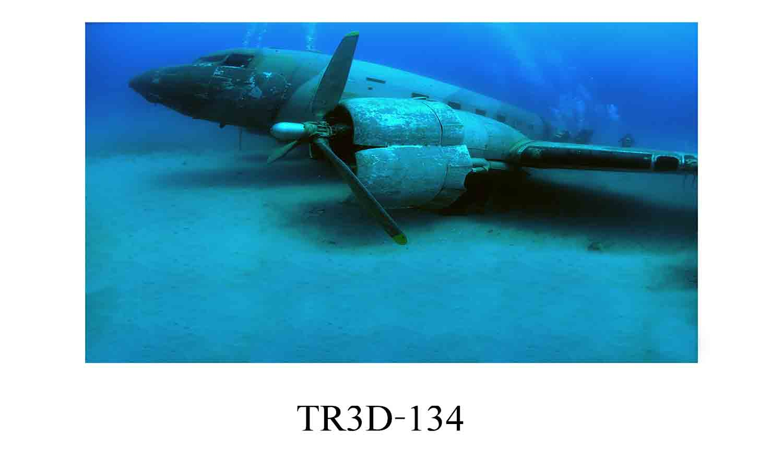 134 - Tranh hồ cá 134