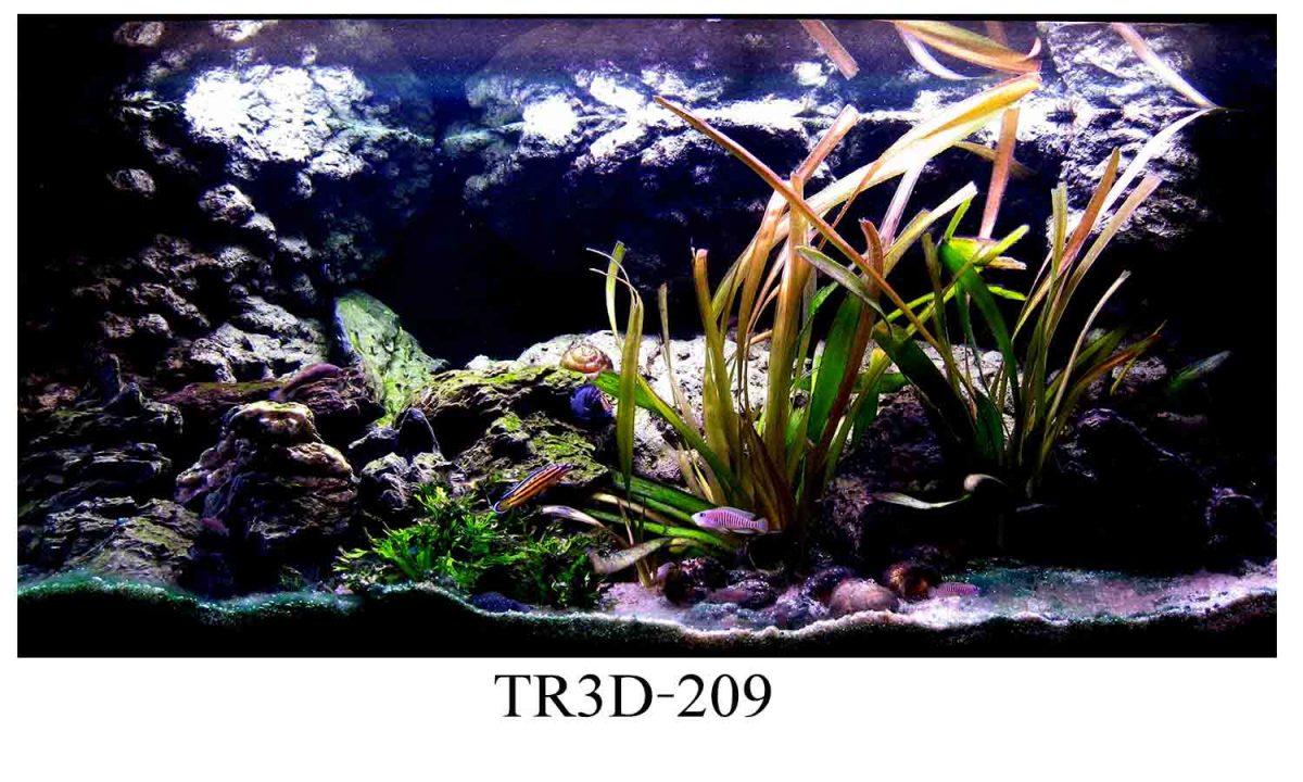 209 1200x720 - Tranh hồ cá 209