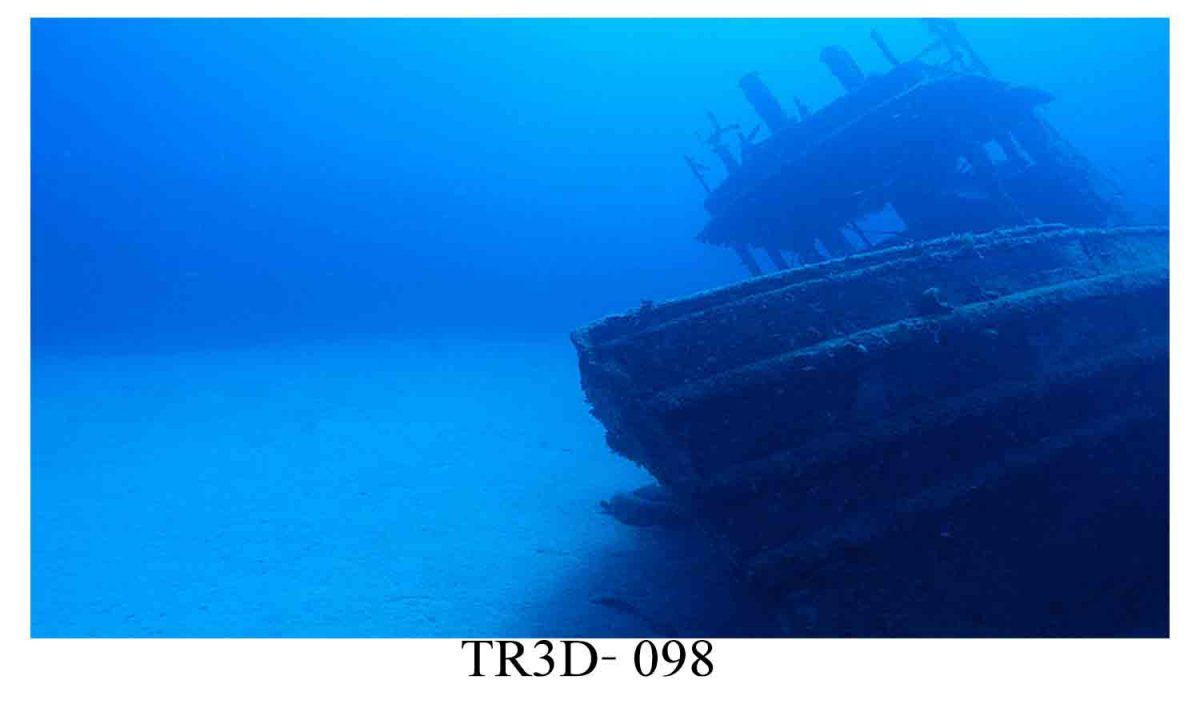 98 1200x720 - Tranh hồ cá 098