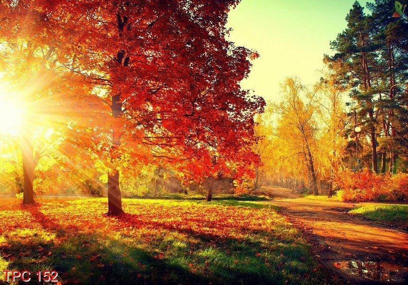 tranh dan tuong 3d 1 - Cách chọn tranh dan tuong 3d cho mùa thu