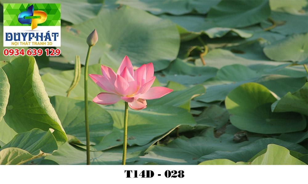 Tranh hồ cá THC578 đẹp cho nhà bạn